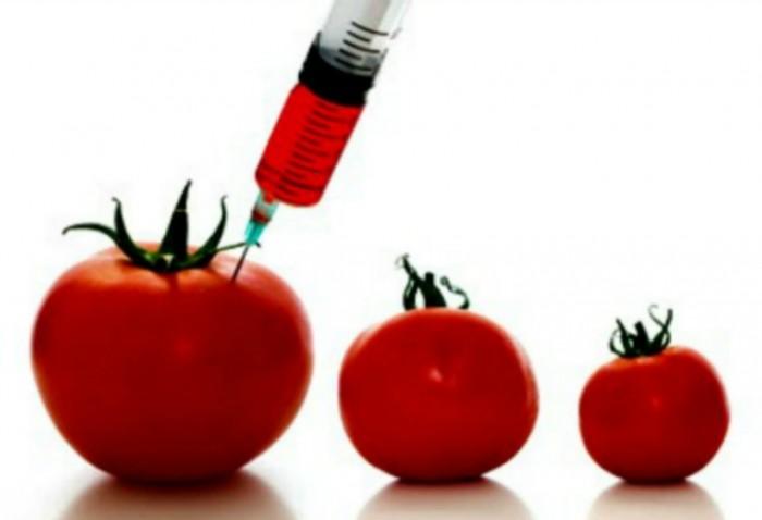 Resuelve tus dudas sobre los alimentos transg nicos medioambientum cr nicas de la naturaleza - Ventajas alimentos transgenicos ...