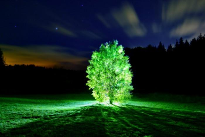 plantas fluorescentes