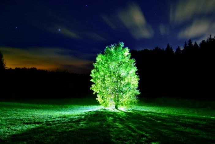 Las plantas fluorescentes son ya una realidad for Cuales son los arboles perennes