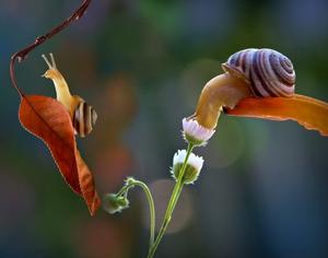 el caracol es símbolo del Slow Food