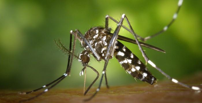 picadura-mosquito-tigre